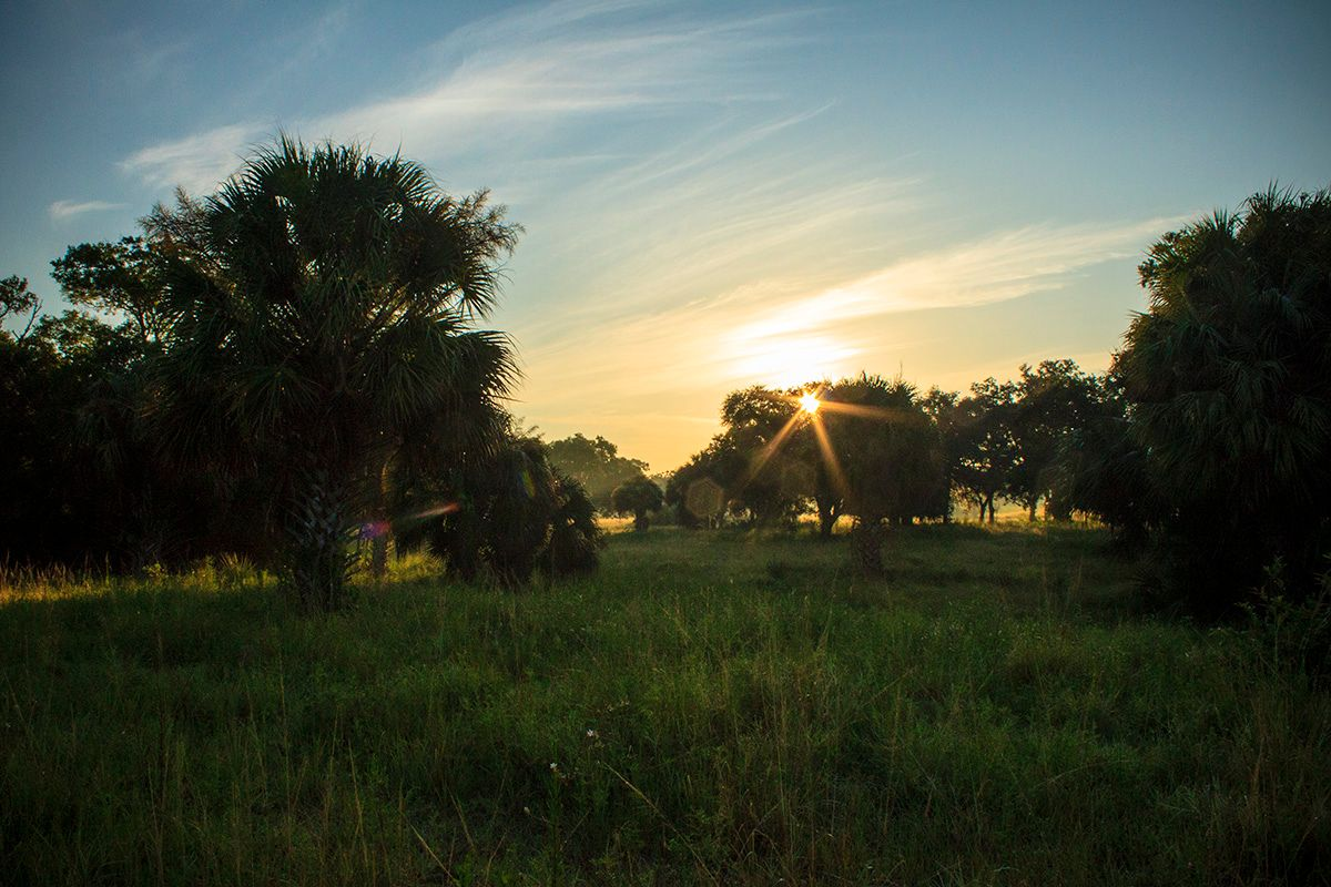 Photo of Florida Heartland in Labelle, FL 33935