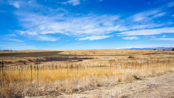 Additional photo for property listing at The Owen 8780 Red Primrose St Franktown, Colorado 80116 United States