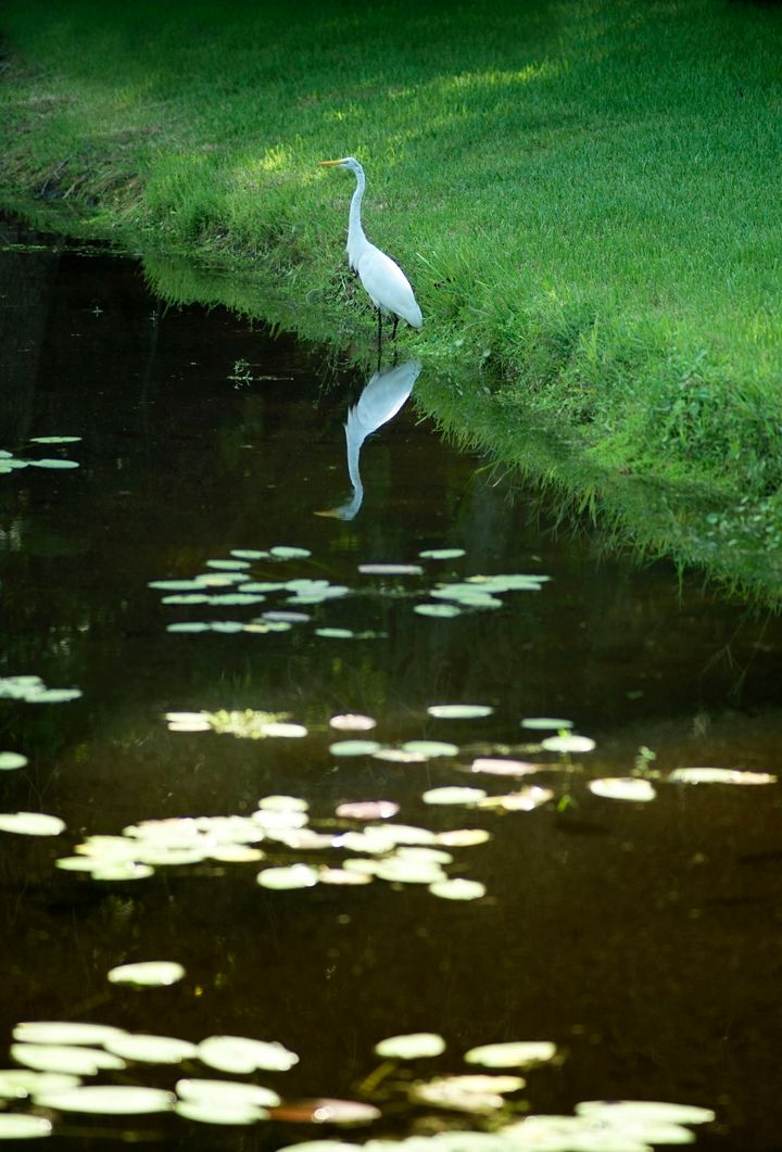 Photo of Bassett Creek at K-Bar Ranch in Tampa, FL 33647
