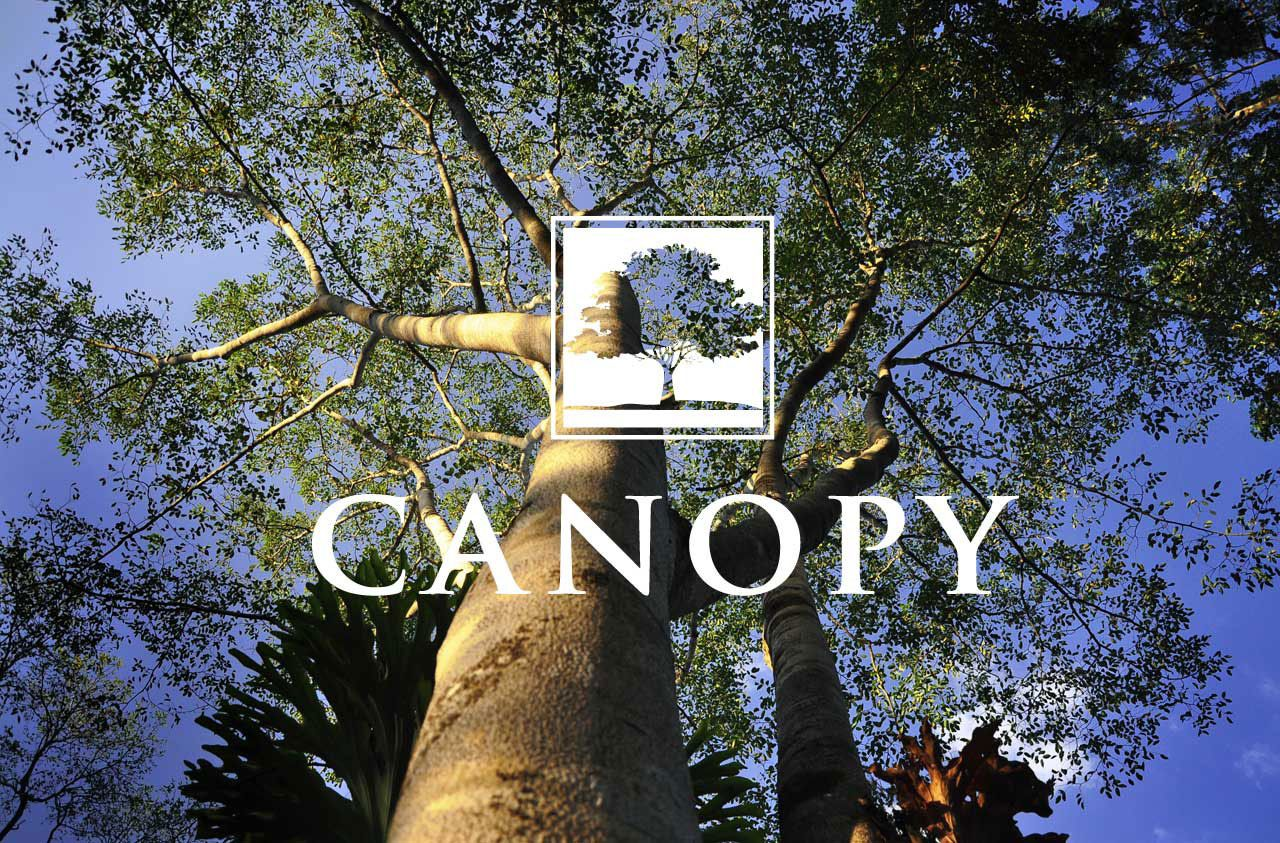 Photo of Canopy in Naples, FL 34120