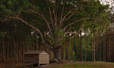 Unifamiliar por un Venta en The Montpelier By Capitol City Homes 321 Colonial Ridge Drive Pittsboro, North Carolina 27312 United States
